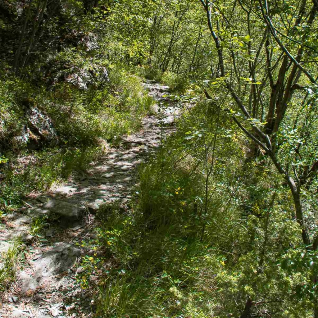 Sentiero per Monteacuto nelle Alpi