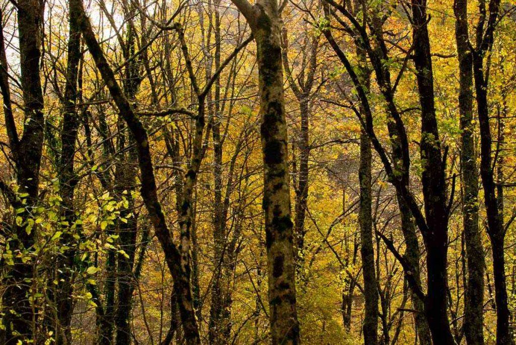 Cascata Acquacheta - bosco verde