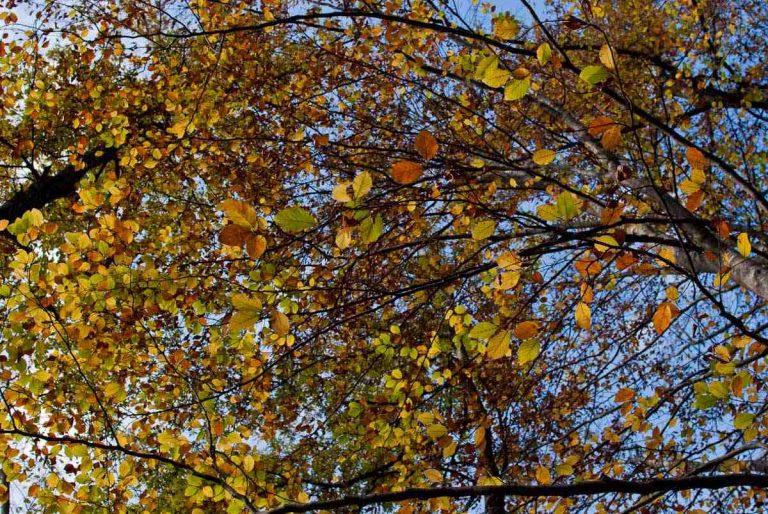 Cascata Acquacheta - foglie sugli alberi
