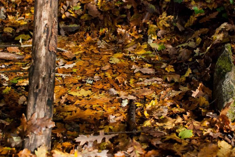 Cascata Acquacheta - macro foglie