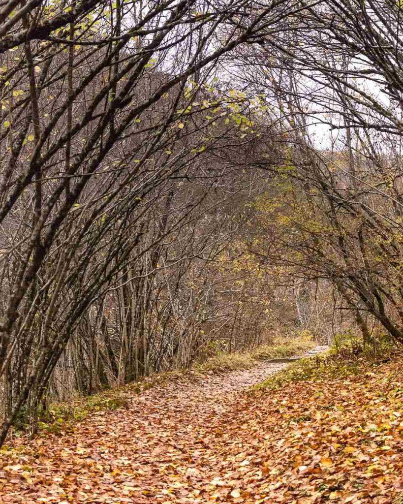 Cascata Acquacheta - sentiero
