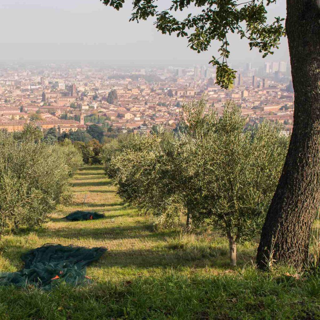 Colli bolognesi: da Villa Aldini