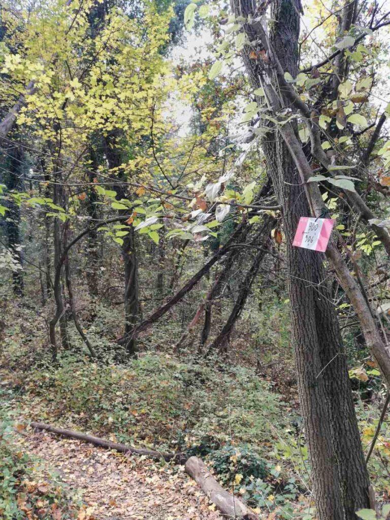 Bivio sentiero 900/906