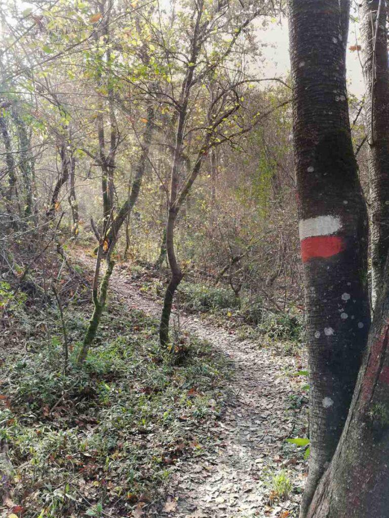 Nel bosco verso il Ravone