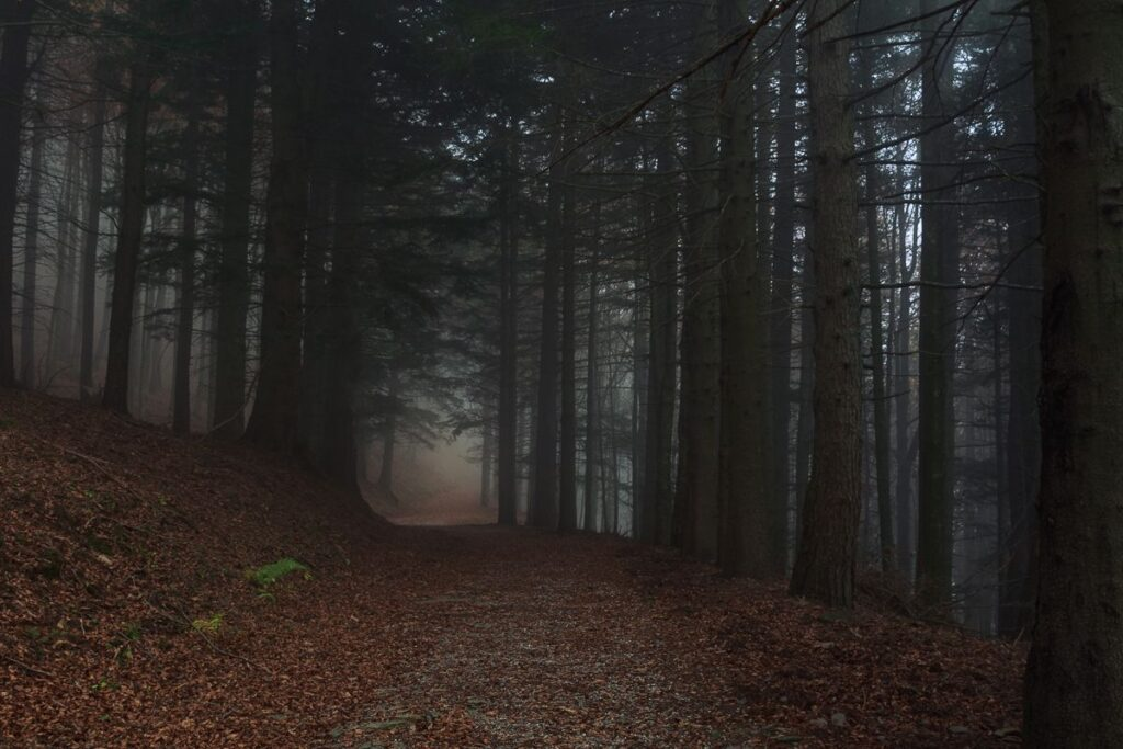 Nebbia sulla Via dei Signori